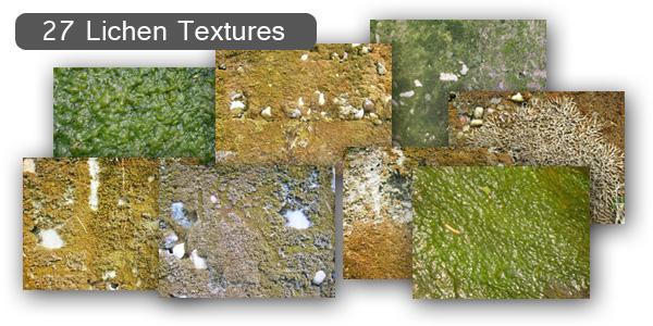 Lichen Moss Textures Set