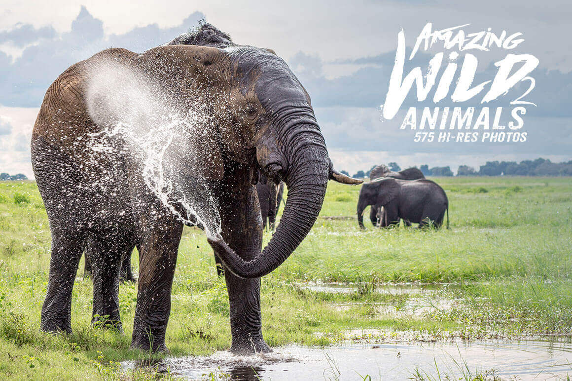 500+ Hi-Res Photos of Wild Animals from Africa - only $9