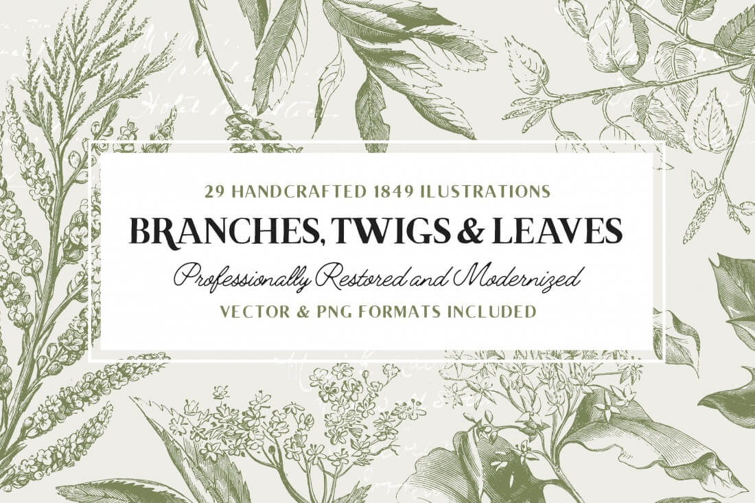 29 Branches Twigs Leaves